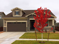 current-house-category, red autumn maple